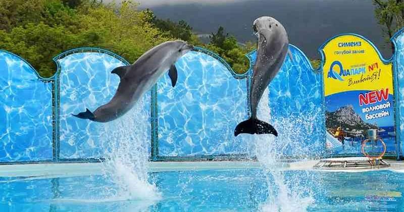 categ-delfinariy-aquatoriya