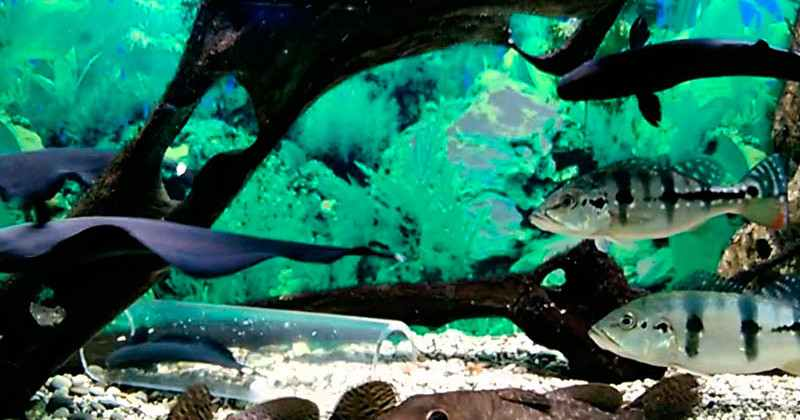 Alushtinskiy-akvarium-photo6