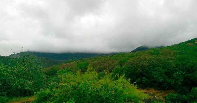 Kamennie-gribi-dolina-soteri-photo4
