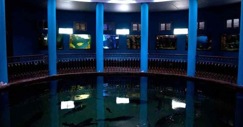 Sevastopolskij-akvarium-muzej-photo1005