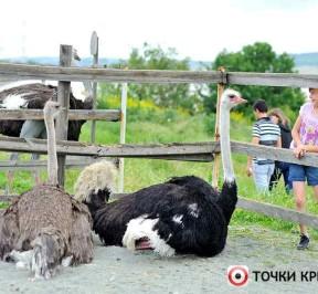 Zoopark-strausinaya-ferma_photo1002