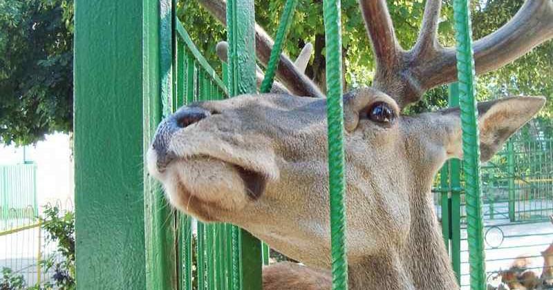 Zoopark-strausinaya-ferma_photo1003